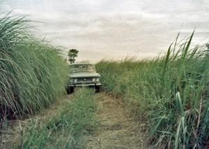 Kunai grass - 1968