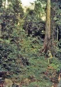 Kokoda Track - 1968