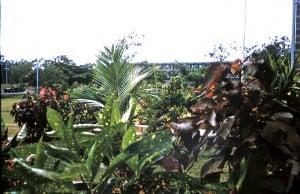 Gardens of B Coy