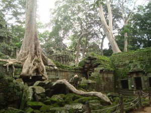 Trees invading the historic temples