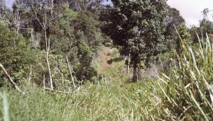 Kokoda Track start, 1975