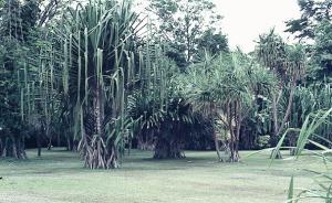 Lae Botanical Gardens