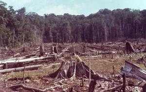 clearfelling, 1972