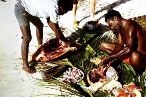 Turtle hunt at Tami island